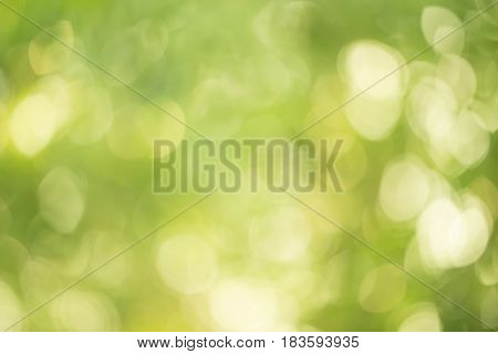 Abstract circular green nature background for design