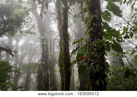 Lush foggy rainforest La Fortuna Costa Rica