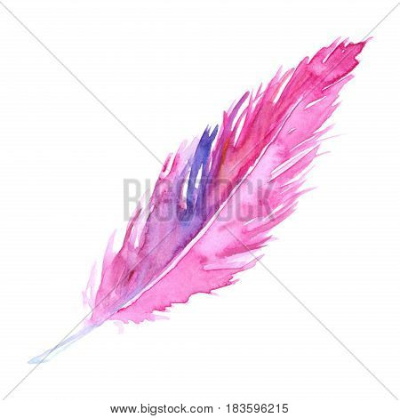 Watercolor pink purple crimson violet bird rustic feather isolated