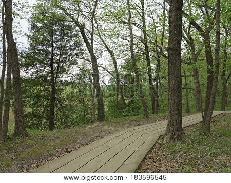 Wooden pathway thru the trees in spring along the bluffs leading to St. Louis Canyon at Starved Rock State Park