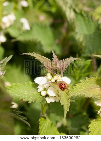A Lovely And Crisp Ladybird On Its Own With Bright Vibrant Colours And Detail On A Leaf And Plant