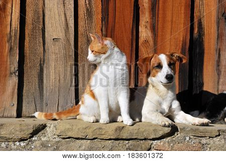 Portraiture of a cat and a dog