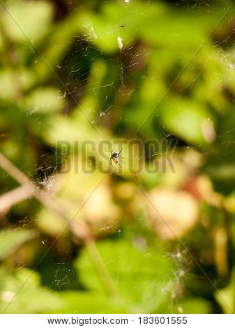 A Spider Upon Its Web In Focus With Bokeh Blue Plant And Leaf Forest Background, Stunning And Scary,
