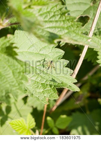 A Big Flying Insect Resting Upon A Leaf In Spring And Casting A Shadow