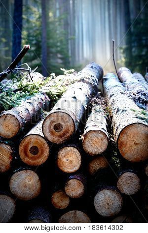 Pile of wood logs stumps in a forest with trees