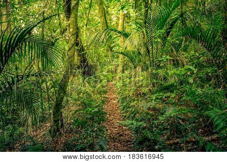 Trees and ferns in tropical jungle