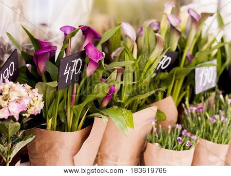 Purple calla In packing with paper in the store