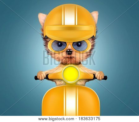 Funny adorable puppy sitting on a yellow motorbike and wearing helmet, isolated on color background. Delivery concept. Realistic 3D illustration with clipping path