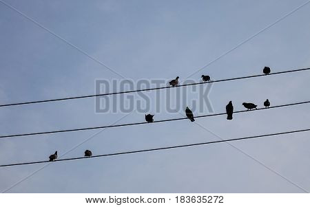 Group Of Birds Sitting On Wires