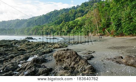 Tourists walking in Corcovado National Park beach and forest, Osa Peninsula, Costa Rica
