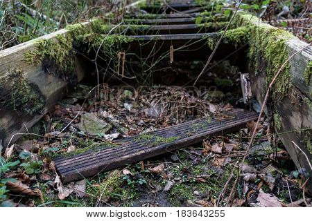 Creepy overgrown and broken stairs in forest