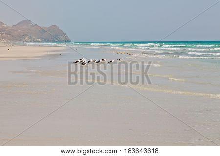 In Oman Coastline Of Salalah The Mountain And Sea Seagull Full