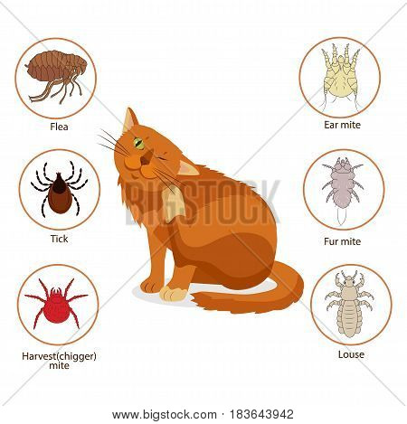 Cat Parasites. What To Know About Feline Parasites. Pet Skin And Fur Parasites Vector. Flea Tick Ear Mite Fur Mite Harvest Mite Louse. Veterinary Medicine Vector.