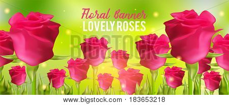 Pink roses background, realistic flowers and green leaves. Aroma rloral vector illustration. Summer banner. Romantic spring season beautiful card