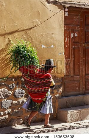 Peruvian Woman Cholita Dressed In Traditional Colorful Cloth, Carrying The Fresh Harvest Of Coca And