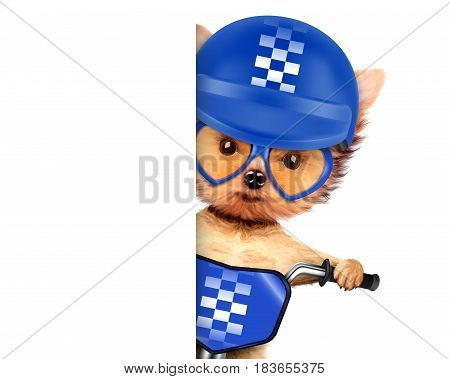 Funny adorable puppy sitting on a bike with blue helmet and sunglasses, isolated on white. Delivery concept. Realistic 3D illustration with clipping path