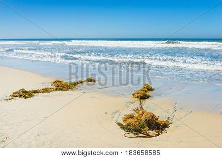 Algae and fishing net. Beach in San Diego California. Seaweed thrown up on the sand beach.