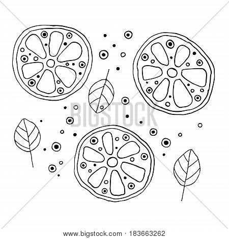 Set Of Vector Hand Drawn Childish Juicy, Fruits. Cute Childlike Lime, Orange, Lemon, Grapefruite, Le