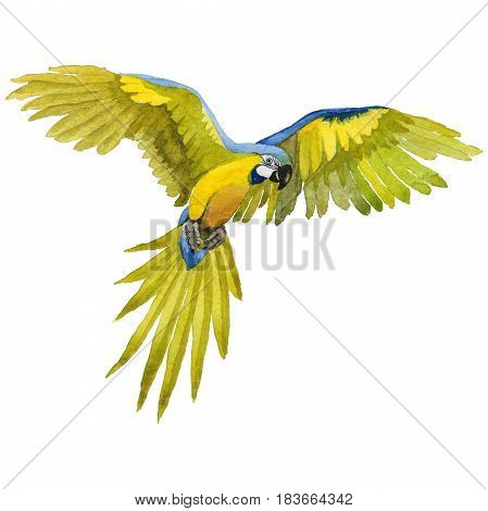 Sky bird parrot macaw in a wildlife by watercolor style isolated. Wild freedom, bird with a flying wings. Aquarelle bird for background, texture, pattern, frame, border or tattoo.