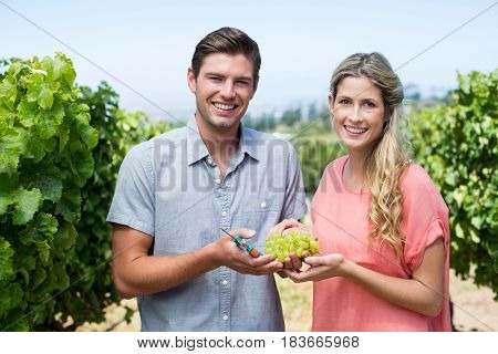 Portrait of happy couple holding grapes and pruning shears while standing at vineyard