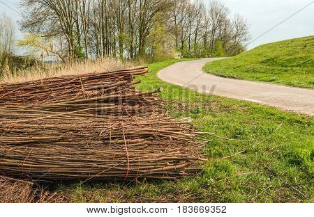 With orange rope bundled osiers piled along the road and waiting for transportation. It is springtime in the Netherlands now.