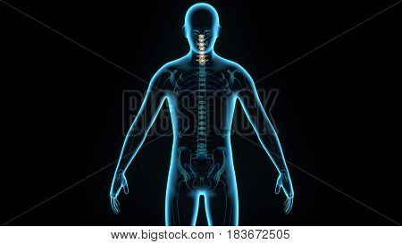 3d illustration human body spinal card of a human body parts