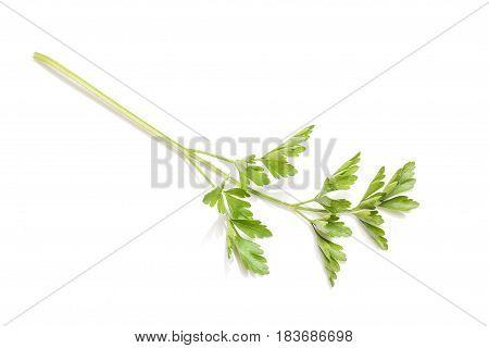 Fresh parsley isolated on white background. Parsley herb.