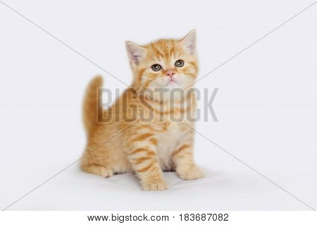 Charming yellow kitten of tender age. Striped baby cat isolated on white.