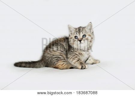 Charming grey kitten gentle. Striped baby cat isolated on white.