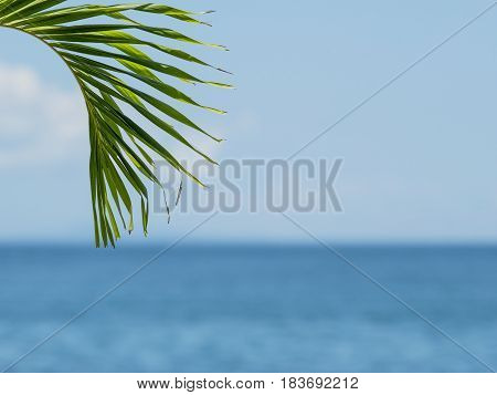 Palm leaf with blurred sea and sky in the background.