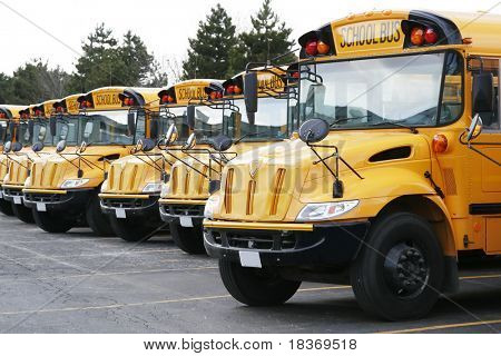 yellow school buses ready to go