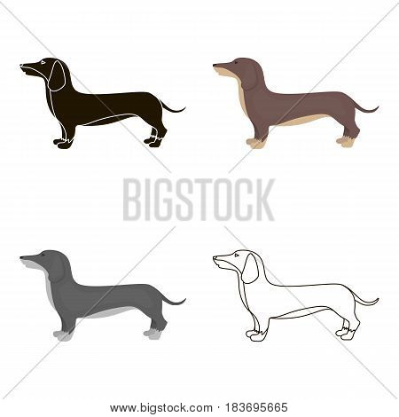 Dachshund vector illustration icon in cartoon design