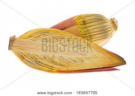 Closeup cross section of fresh raw banana blossom with maroon purplish flowers cut in half isolated on white background