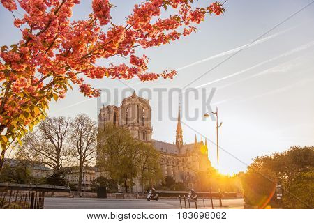 Paris, Notre Dame Cathedral With Blossomed Tree In France