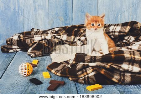 Ginger kitten with toys. Small cat at plaid blanket
