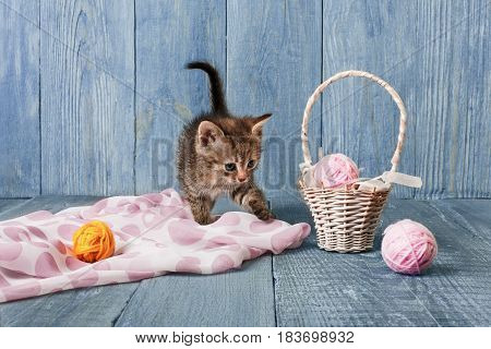 Gray funny kitten with pink wool ball and straw basket. Playful small cat at blue wood background.