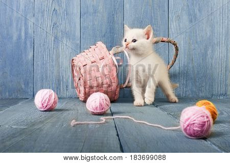White funny kitten play with pink wool ball and straw basket. Playful small cat at blue wood background.