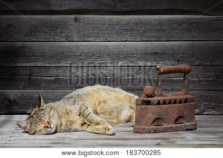 A Thick Cat Is Located Next To A Heavy And Rusty Old Coal Iron On A Wooden Surface