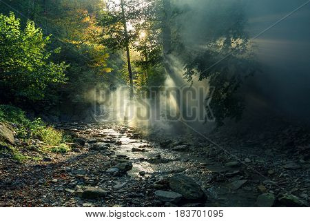 The sun's rays make their way through the morning mist against the backdrop of a mountain river and a forest. Picturesque forest landscape. Gelendzhik Russia