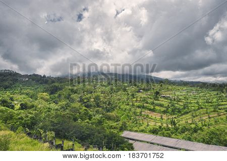 Colorful landscape with green vibrant rice terraces, a tropical jungle with palm trees and mountains covered with heavy clouds on the background, Karangasem, Bali island