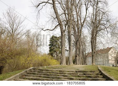 Trees along a garden path in Graz the capital of federal state of Styria Austria