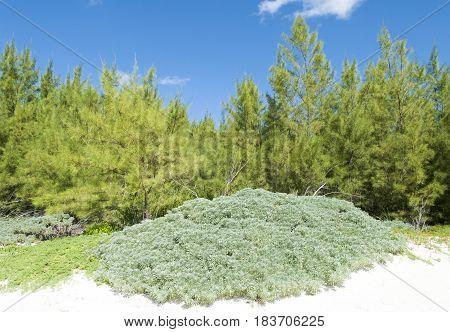 Freeport town beach landscape on Grand Bahama Island.