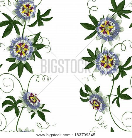 Passiflora seamless border. Wallpaper with exotic branch isolated on white. Background for wedding invitations, greeting cards.