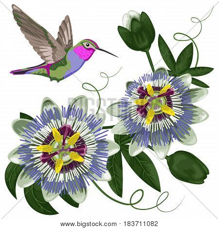 Hummingbird and passiflora. Template for postcards, greeting cards, wedding invitations. Pattern for textile prints.