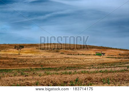 one pine tree alone and a abandoned house in a field of brown reddish dirt against blue sky