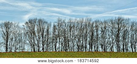 Landscape with a row of leafless trees in Winter