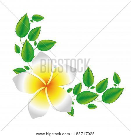 white background of realistic malva flower with leaves vector illustration