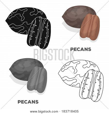 Pecans.Different kinds of nuts single icon in cartoon style vector symbol stock web illustration.