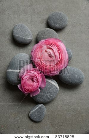 Two pink ranunculus flower and pile of stone on gray background