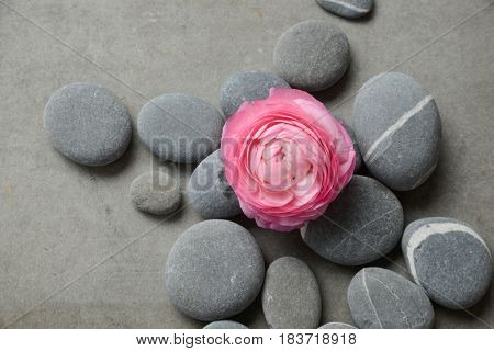 Pink ranunculus and pile of stone on gray background